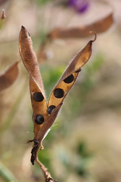 5 Allow pods to brown