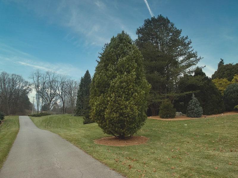 5 Chalet Swiss Stone Pine
