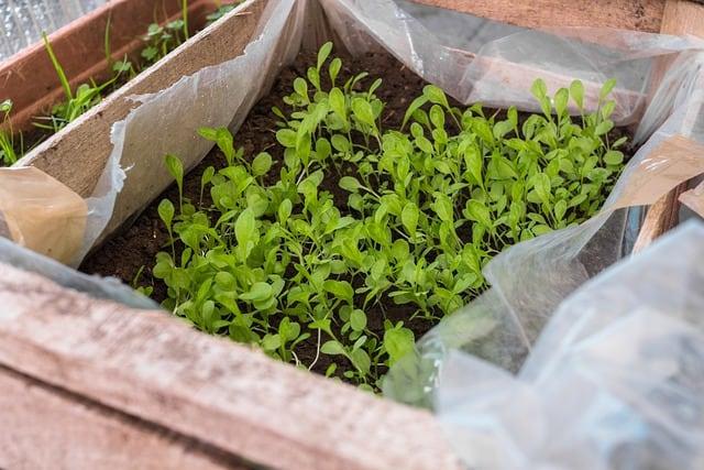 5 Hardening off creates healthy plants