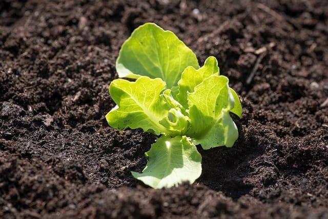 5 Prepare the soil before planting