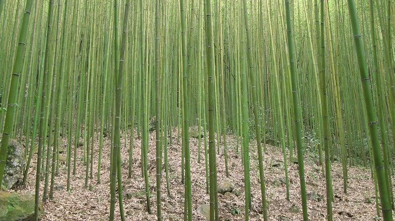 5 Prune the Bamboo