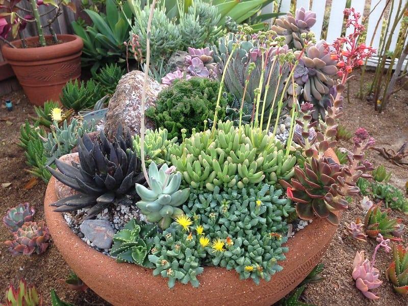 5 Succulent Garden