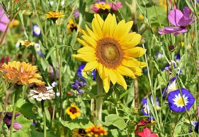 6 Flower Garden