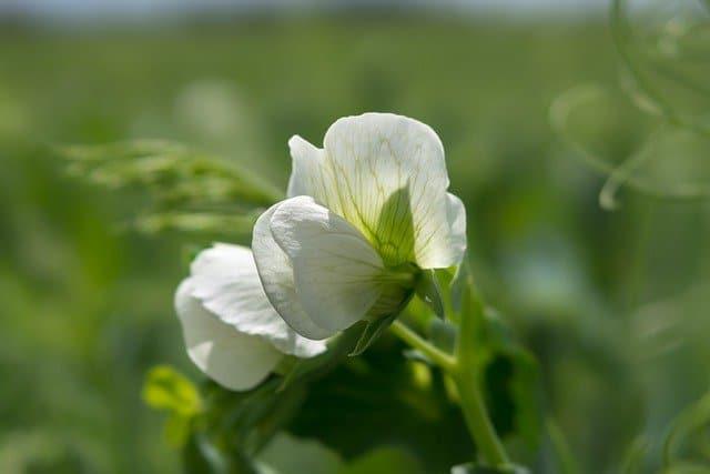 6 Healthy plants set flowers