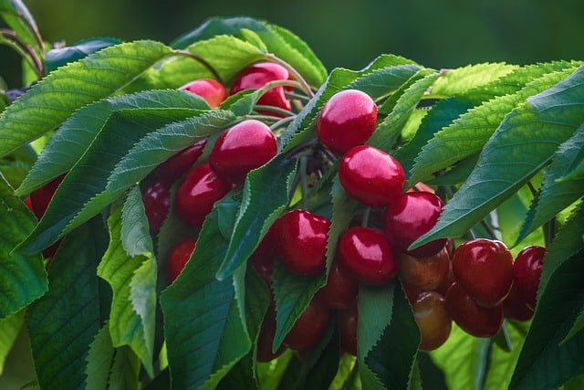 6 Protect fruit from birds