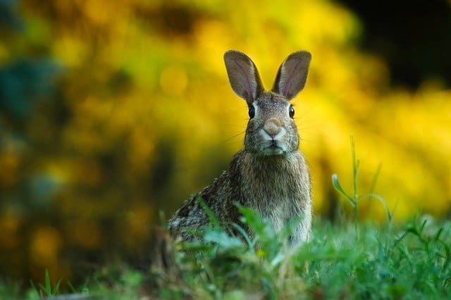 6 Rabbit