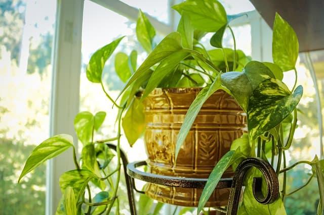 7 Inspect foliage regularly