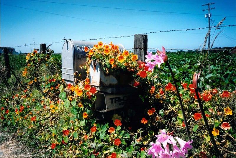 7 Mailbox Flowers