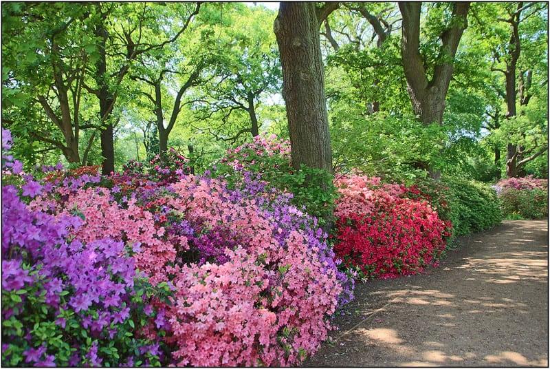 7 Path Hugging Flower Beds