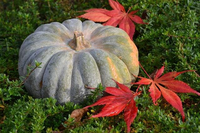 7 Pumpkin