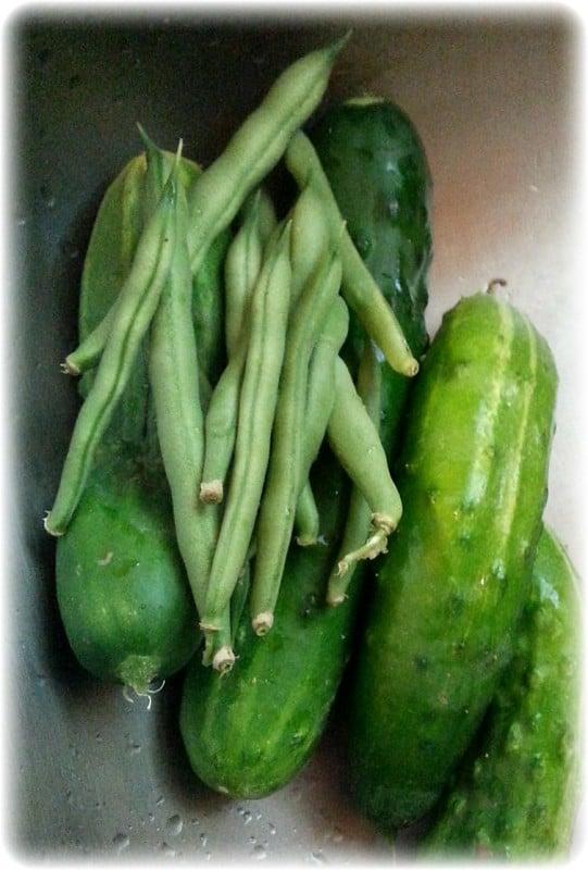 8 Alibi Cucumber 1