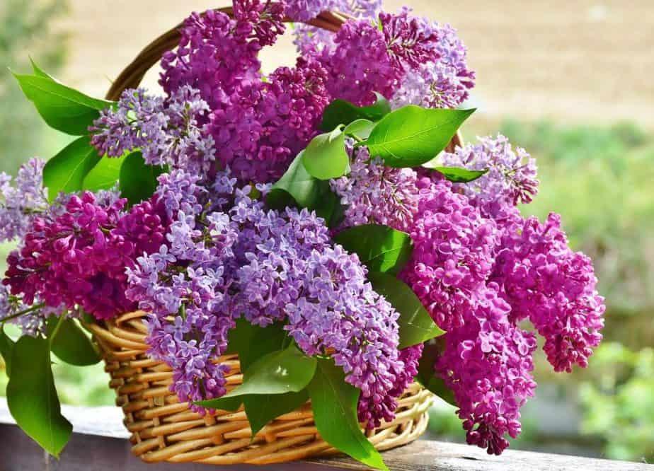 8 Lilac Bouquet