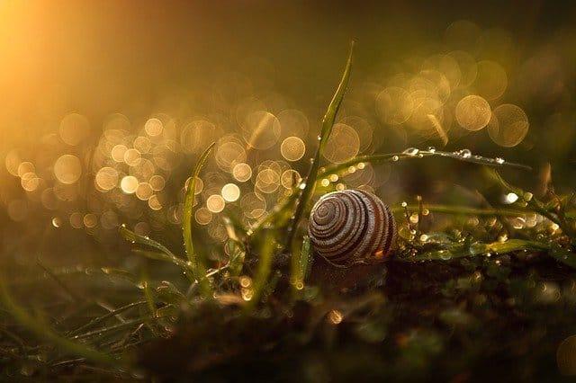 8 Snail