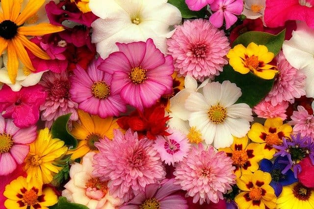 9 Mixed Flowers