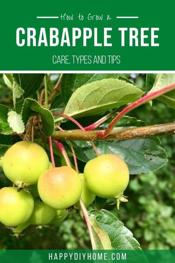 Crabapple tree 2
