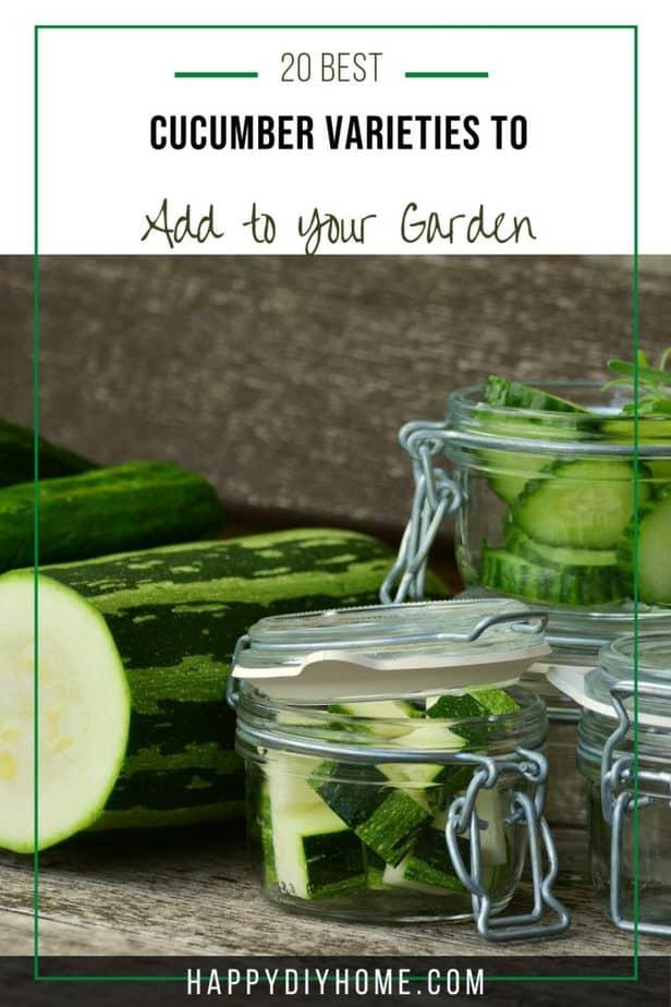 Cucumber Varieties 2