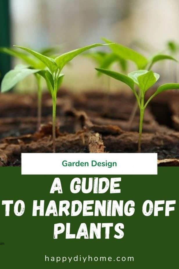 Hardening off plants 1