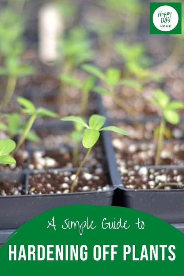 Hardening off plants 2