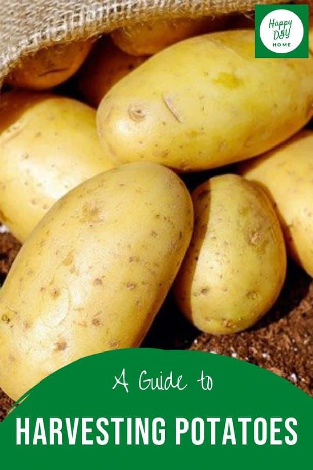 Harvesting Potatoes 2