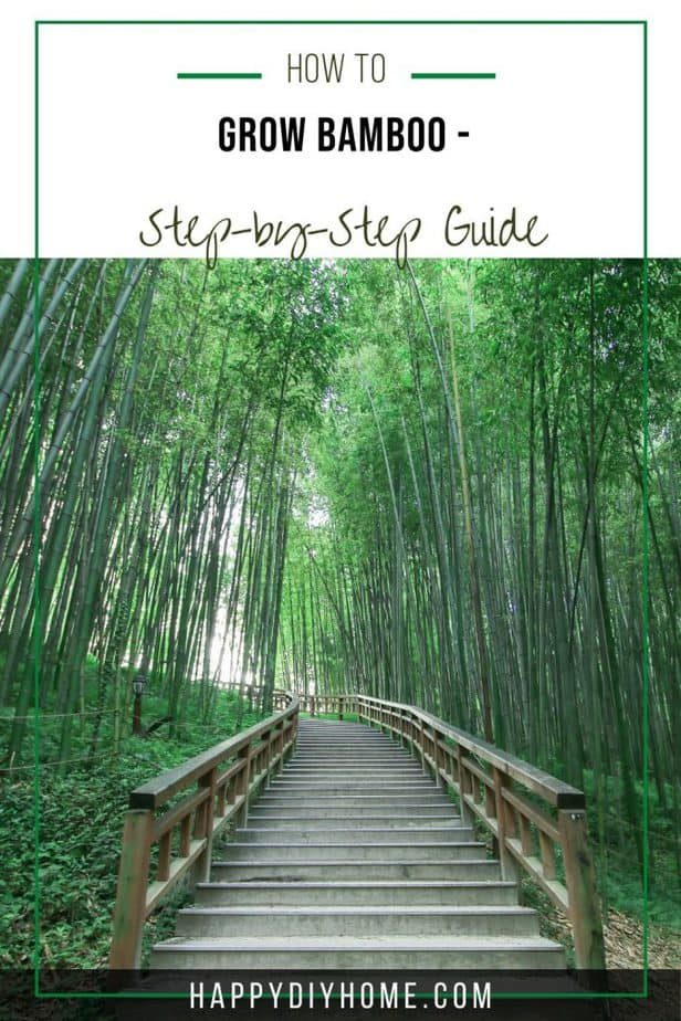How to Grow Bamboo 2