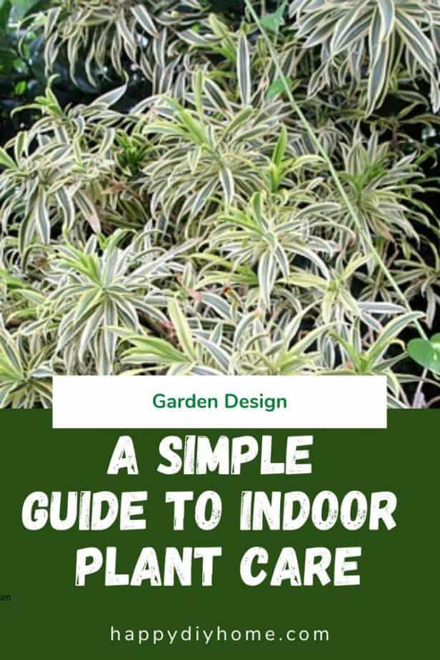 Indoor plant care 1