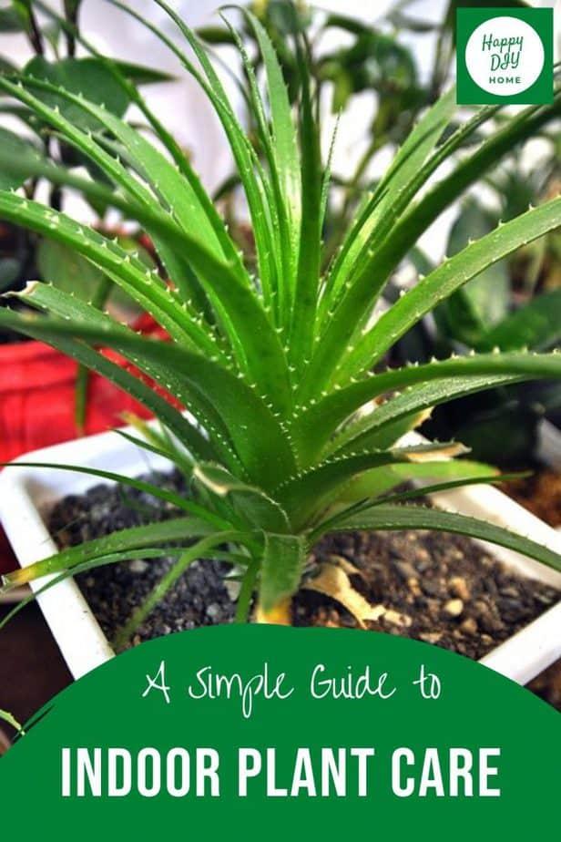 Indoor plant care 2