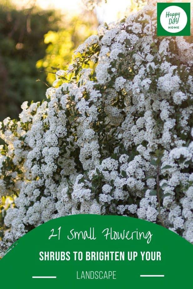 Small Flowering Shrubs 2