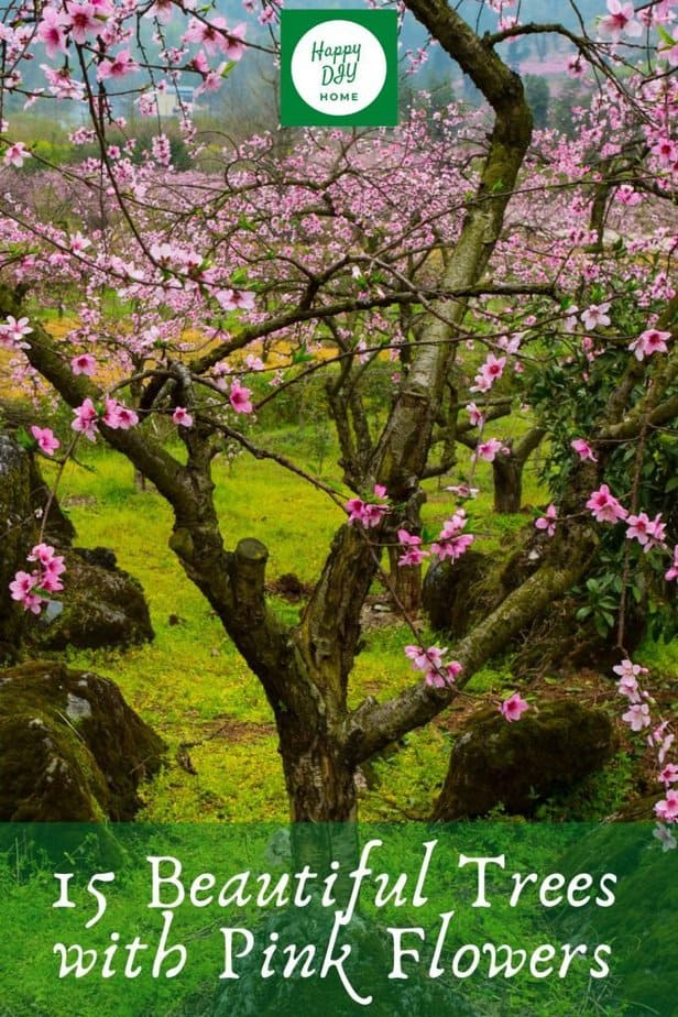 1 15 Beautiful Trees with Pink Flowers