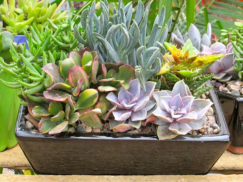 1 New Succulent Pot