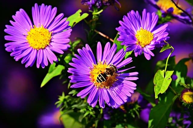 1 Plant flowers that attract bees