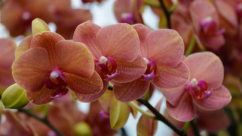 10 Orchids