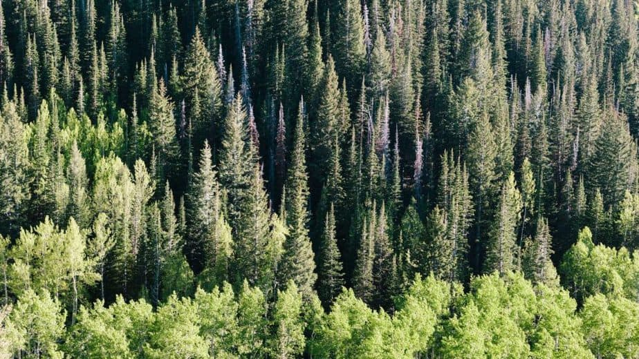11. Subalpine tree line