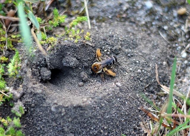14. Bee underground