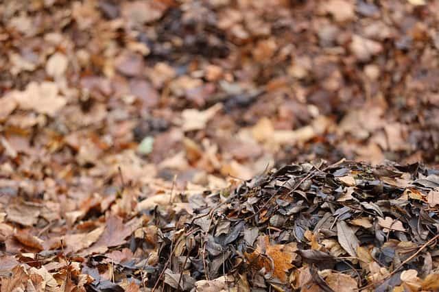 15. leaves