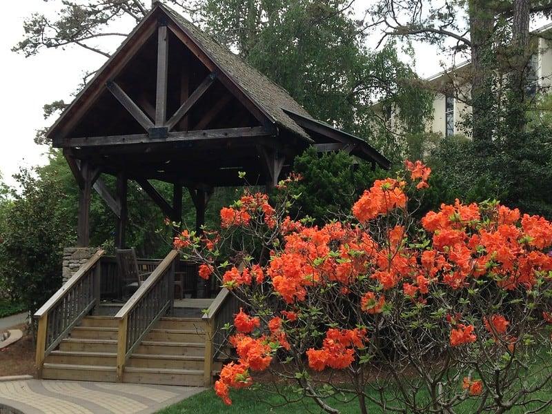19 Rhododendron Stewartstonian