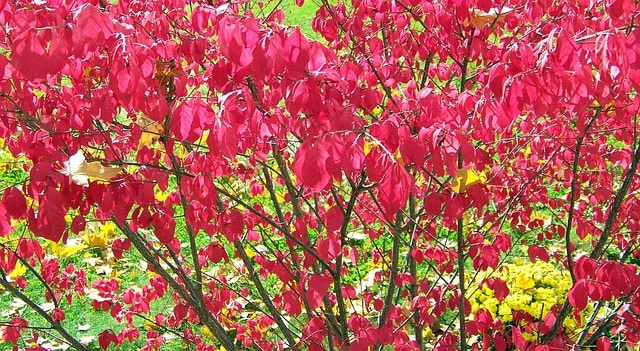 2 Light encourages red foliage