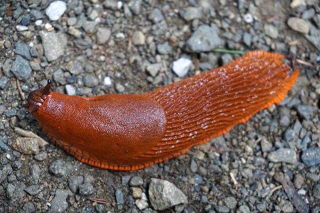 2 Slugs dont have shells