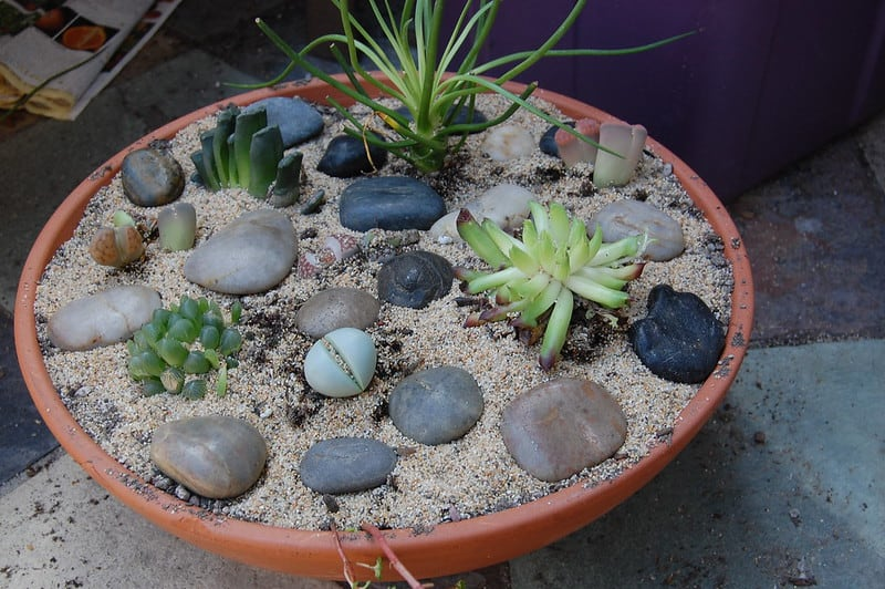 2 Succulent Buying Guide