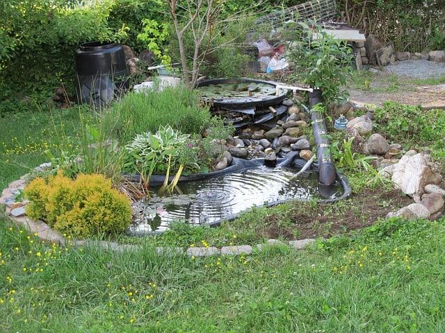 2. Bee friendly pond