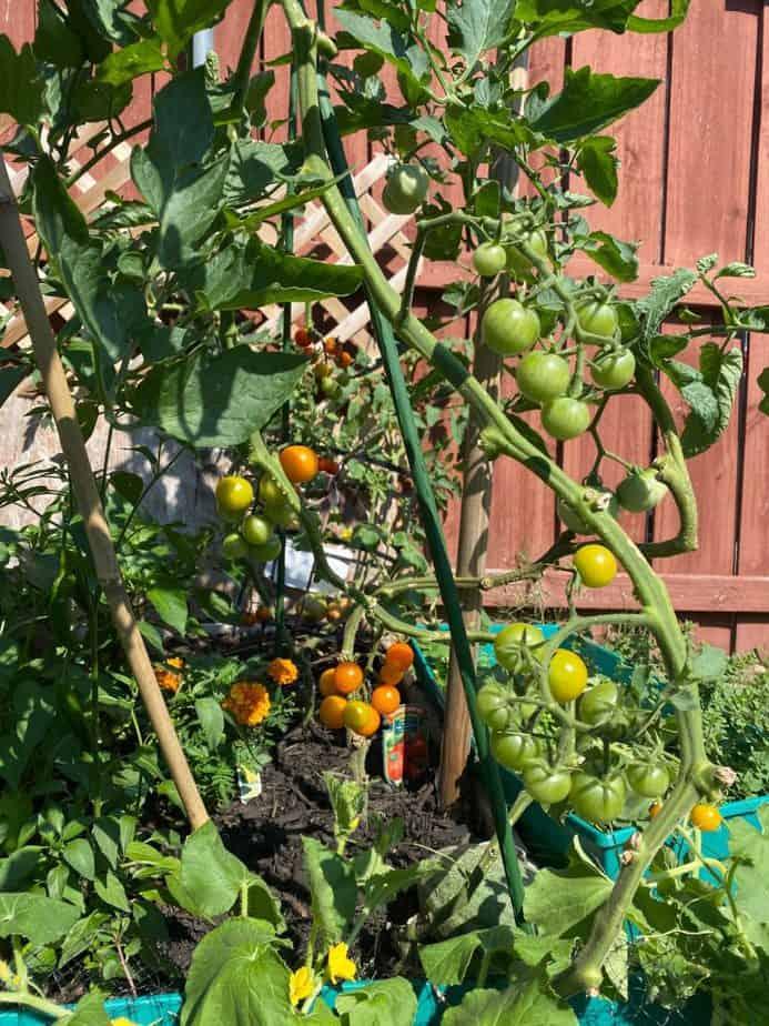 2. Tomatoes