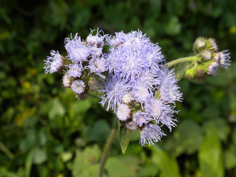 3 Floss Flowers