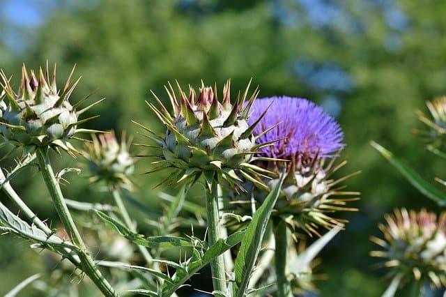 3 Plant in sunny fertile soil