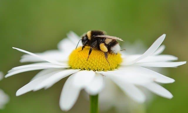 3 Pollinators like open flowers