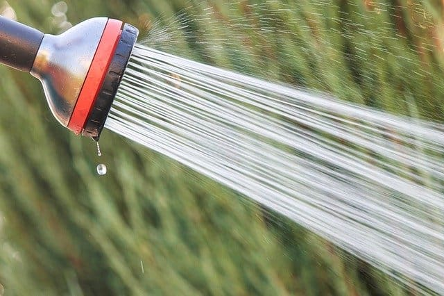 4 Keep foliage dry when watering