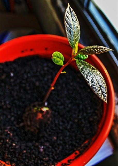 5 Grow seedlings on undercover