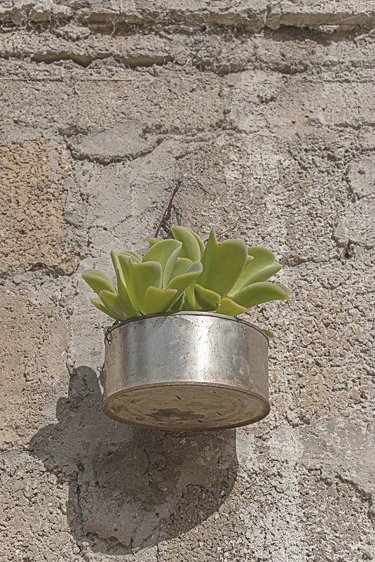 5 Tin Can Planter