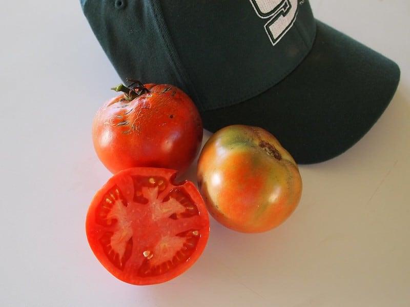 7 Better Boy Tomato