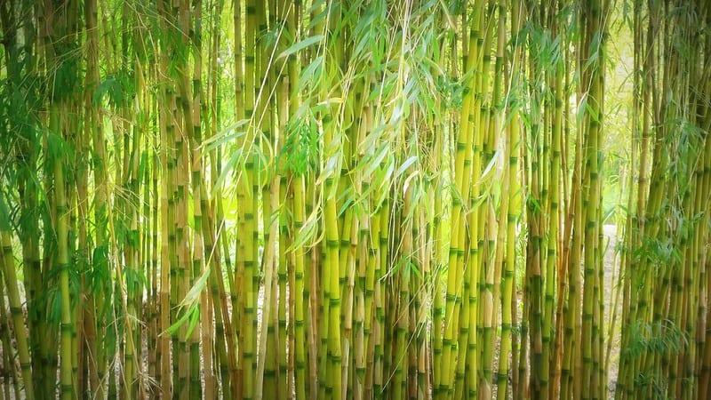8 Bamboo