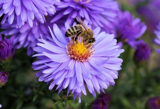 8 Open flowers provide easy access