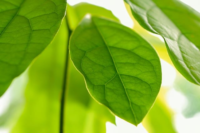 8 Pests may target the foliage